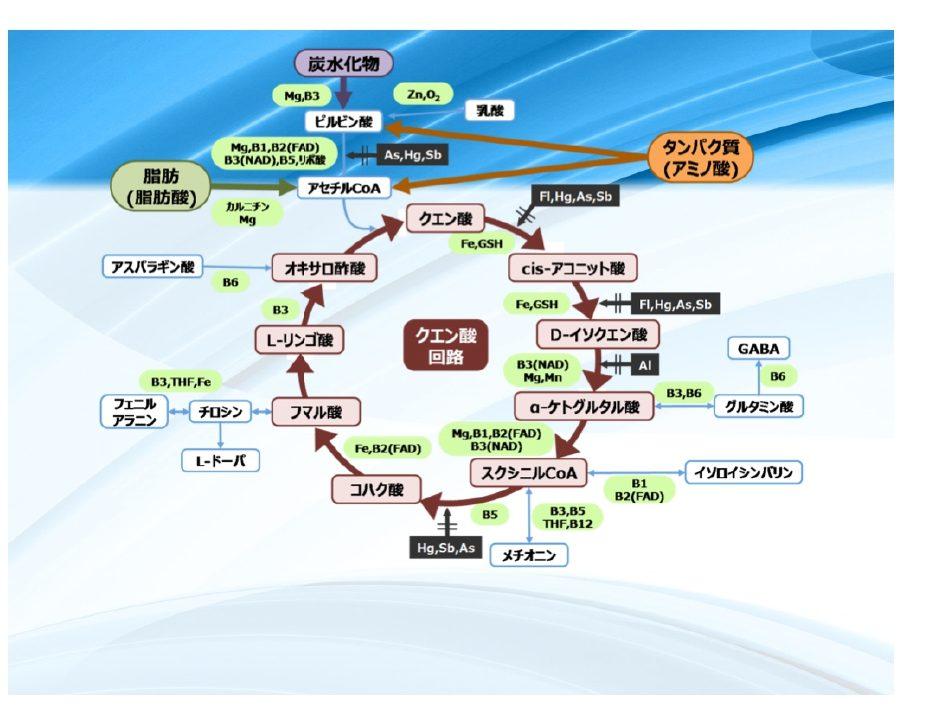 エネルギーの産生回路