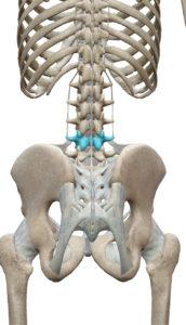 青い部分が第4腰椎